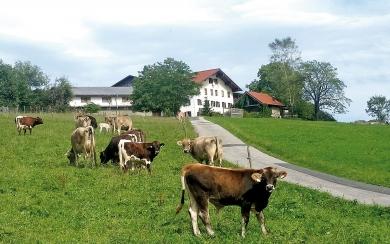 Biohof Sperlbauer